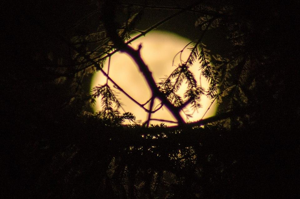 Plenilunio nella buia valle dell' Oia