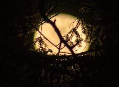 Plenilunio nella buia valle dell'Oia