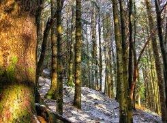 La Foresta di Badia Prataglia, camminando adagio a Campo dell' Agio