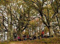 Grigliando all'ombra dei patriarchi arborei dell' alto Tramazzo