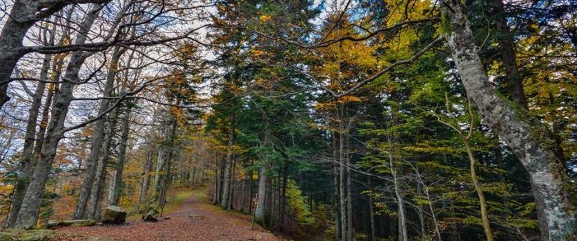 Varcando l' Alpe tra Romagna e Toscana